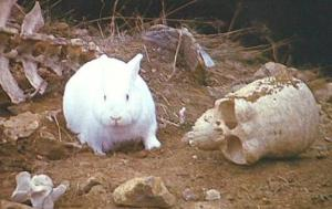 The Killer Rabbit of Caerbannog