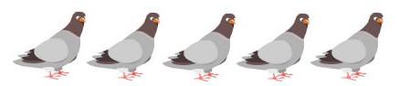 5 pigeons